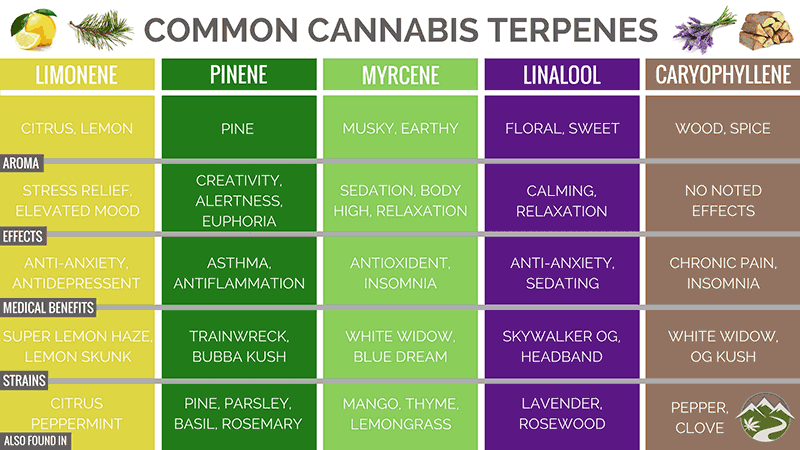 Terpenes provide a plethora of beneficial effects