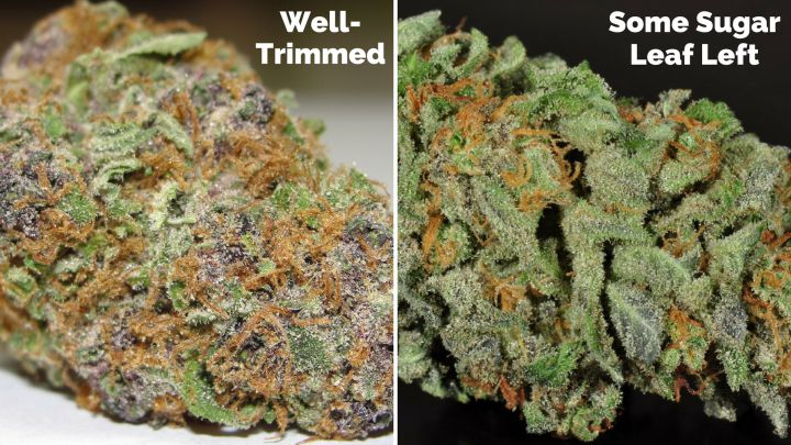 Example of well-trimmed bud vs. one with some sugar leaves left on