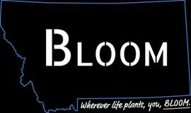 Bloom - Libby