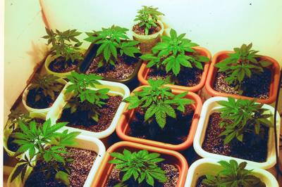 State by State Cultivation Laws: AK, CO, DC & OR