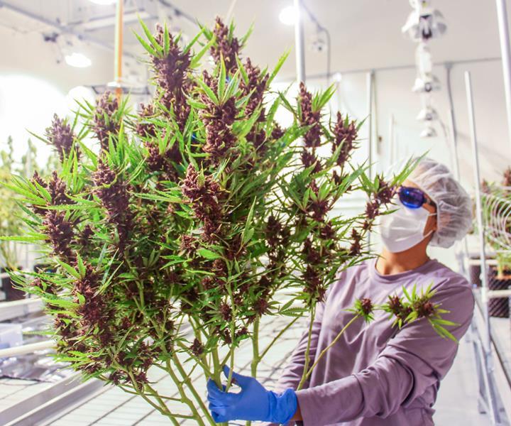 Massachusetts Marijuana Dispensaries Potguide Com