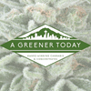 A Greener Today Marijuana - Shoreline