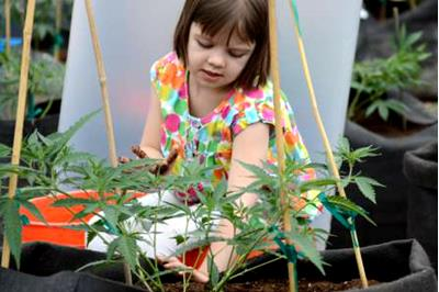 Charlotte's Web: The Strain That's Saving Lives
