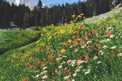 How to Enjoy Colorado's Wildflower Scenery with Cannabis