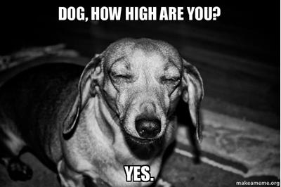 Ask Pot Guide v.9: What If I Get Too High?