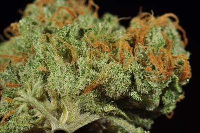 Blue Dream Cannabis Strain History and Information