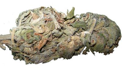 Tips for Spotting Moldy Weed